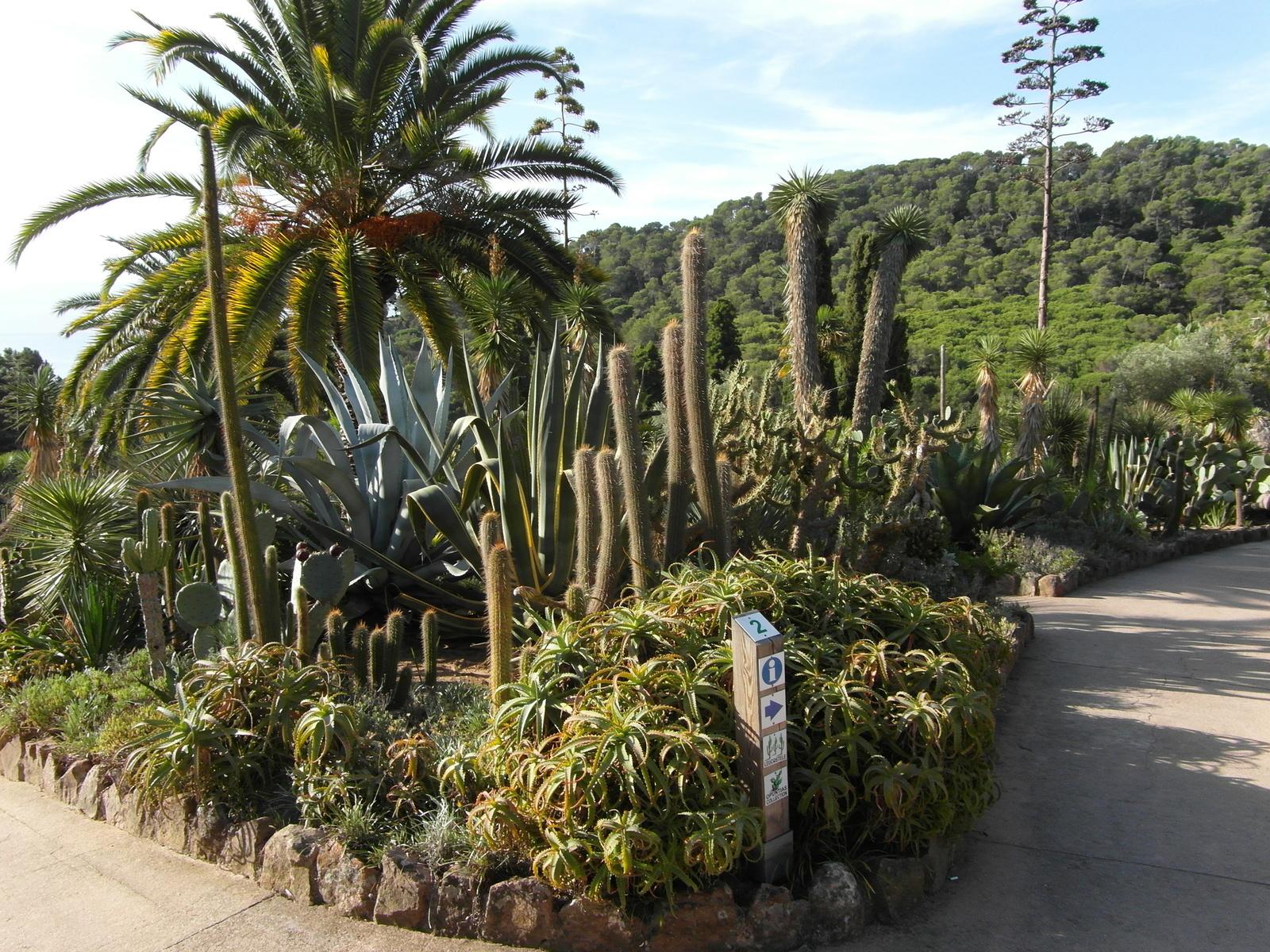 Пинья-де-Роса