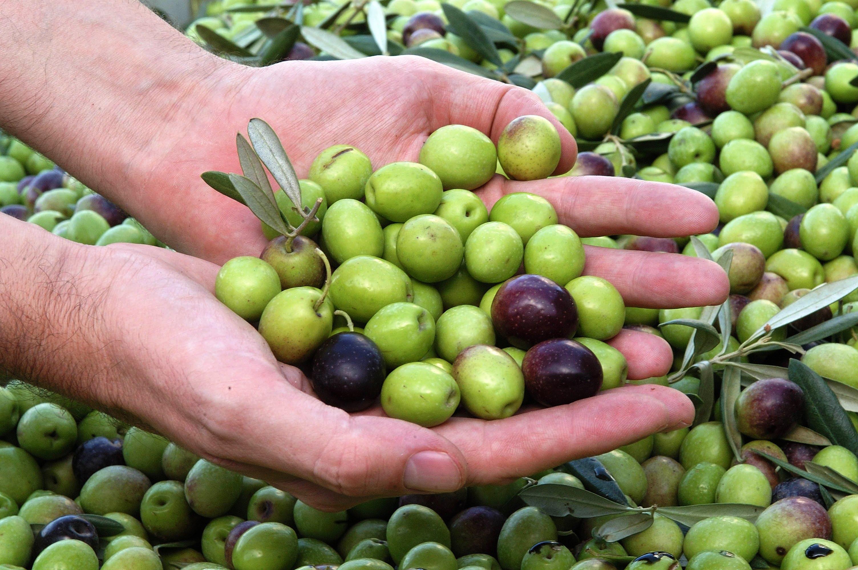 Оливки арбекин