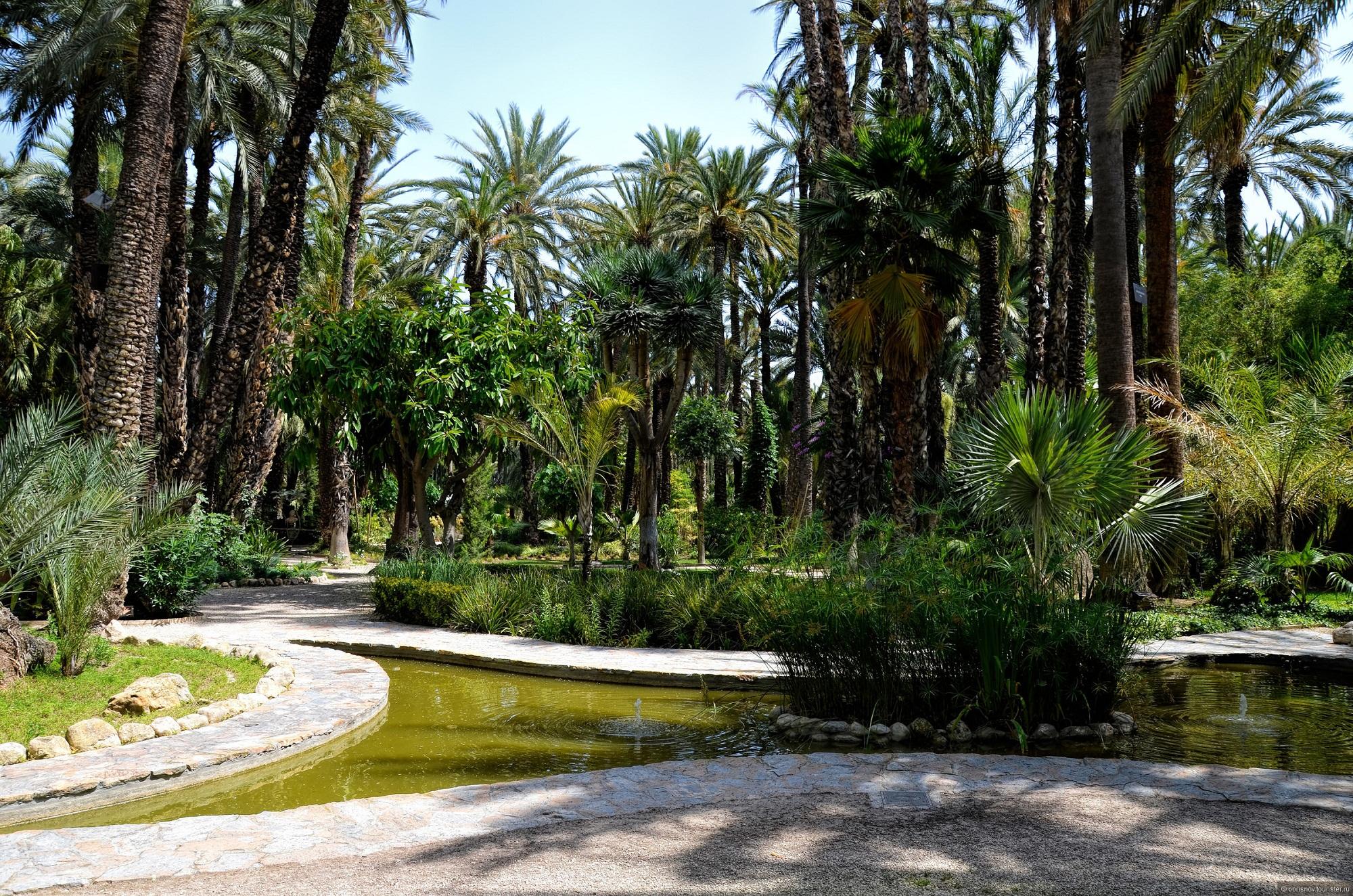 Пальмовый лес в городе Эльче