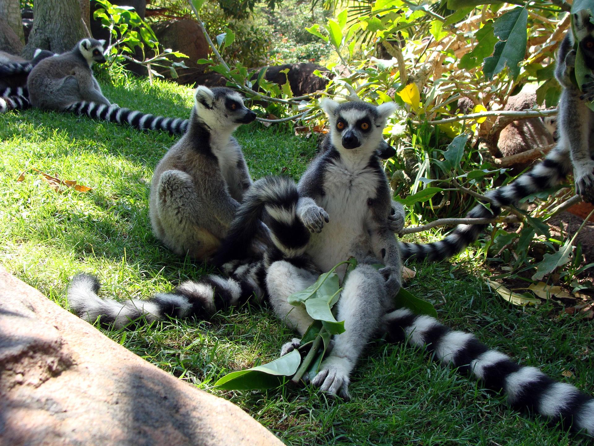 зоопарк Bioparc