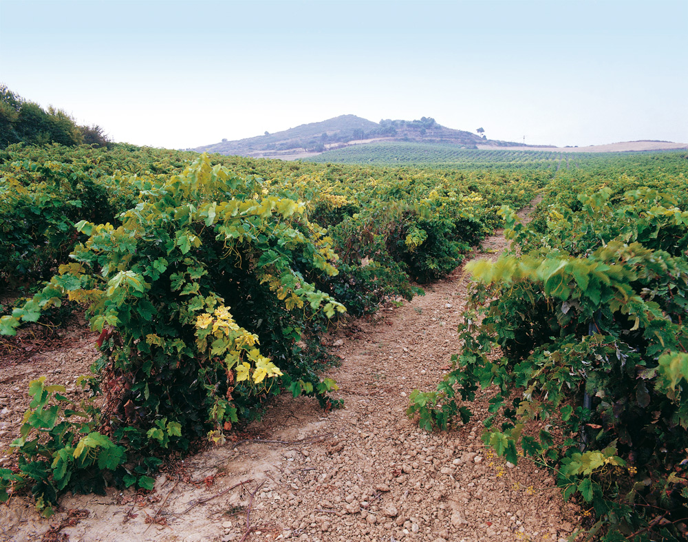 Виноградники региона Наварра
