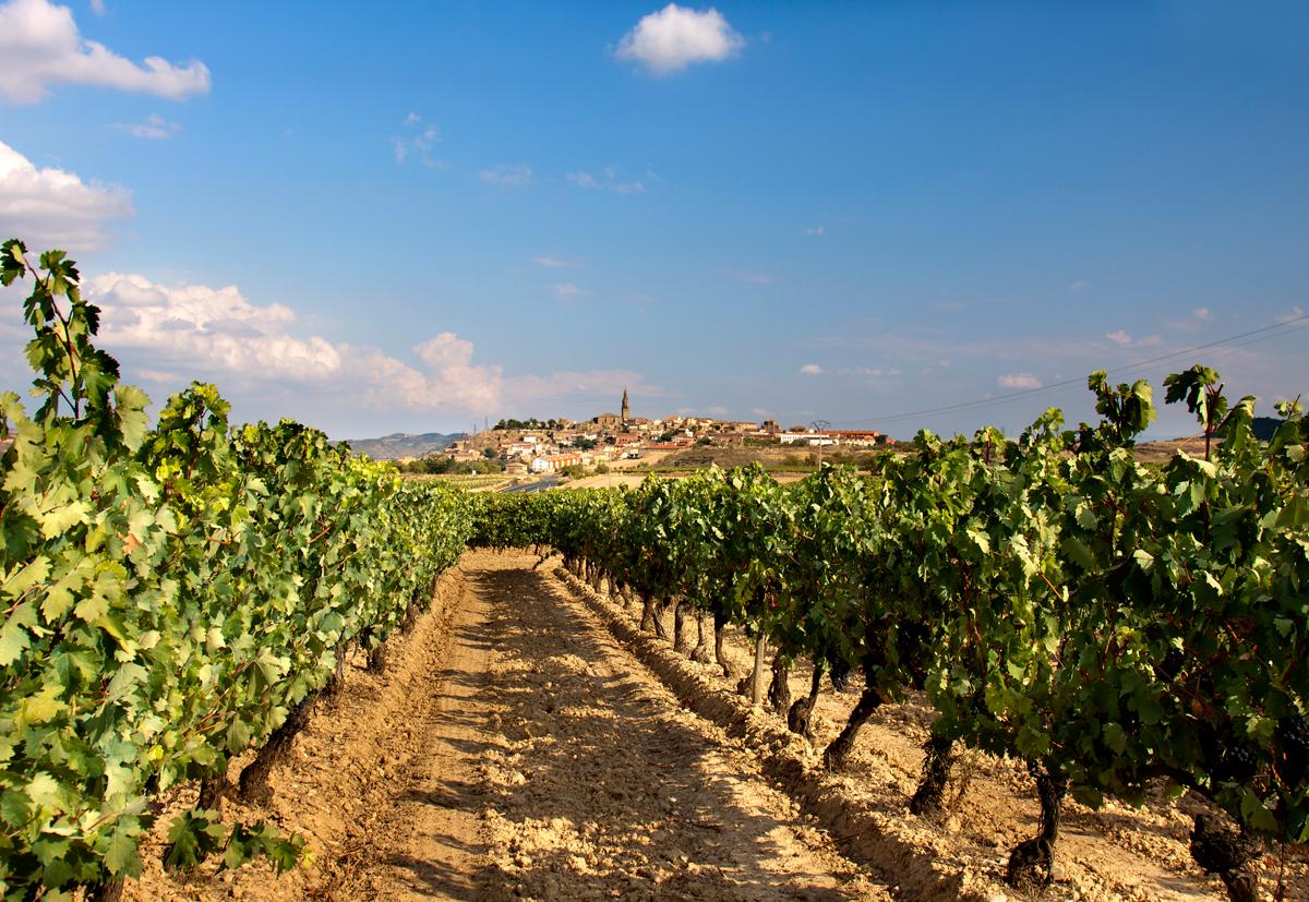 Бесконечные виноградники Риохи